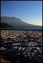 Layer of dead trees on Spirit Lake, and Mt St Helens. Mount St Helens National Volcanic Monument, Washington ( color)
