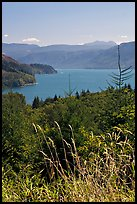 Summer grasses and Riffe Lake. Washington ( color)