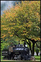 Locomotive under tree in fall foliage, Newhalem. Washington ( color)