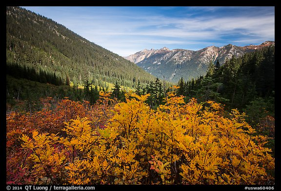 Fall foliage in valley below Easy Pass, Okanogan National Forest. Washington (color)