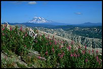 View over Cascade range with Snowy volcano. Mount St Helens National Volcanic Monument, Washington (color)