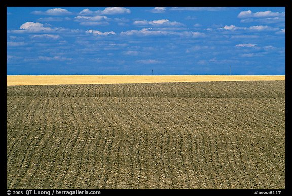 Field with plowing lines, The Palouse. Washington (color)
