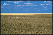 Field with plowing lines, The Palouse. Washington ( color)