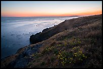 Coastline with wildflowers at sunset near Iceberg Point, Lopez Island. San Juan Islands National Monument, Washington ( color)