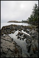 Rocky shore with pool and marine layer, Watmough Bay, Lopez Island. Washington ( color)
