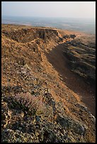 Wildflowers and cliff, Saddle Mountain, Hanford Reach National Monument. Washington ( color)