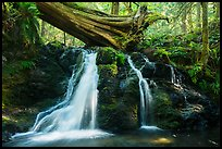 Waterfall and fallen tree, Cascade Creek, Moran State Park. Washington ( color)