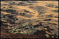 Shrubs and volcanic rocks on Saddle Mountain, Hanford Reach National Monument. Washington ( color)