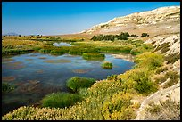 Savage Island channel wetlands and bluffs, Hanford Reach National Monument. Washington ( color)