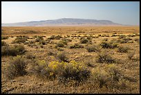 Sagebrush and Rattlesnake Mountain, Hanford Reach National Monument. Washington ( color)