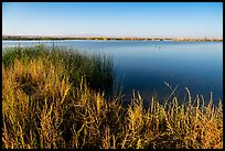 Wahluke Ponds with wading birds, Hanford Reach National Monument. Washington ( color)