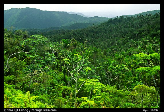 Tropical forest on hillsides. Puerto Rico