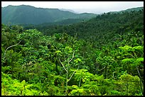 Tropical forest on hillsides. Puerto Rico (color)