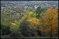 Trees in fall colors and city. Hot Springs, Arkansas, USA ( color)