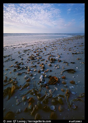 Shells washed-up on shore, Sanibel Island. Florida, USA (color)