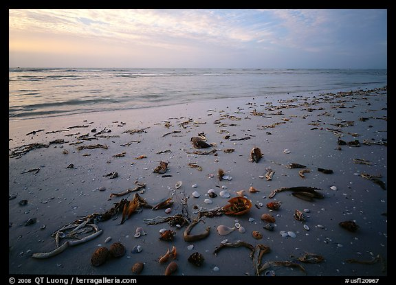 Shells and seaweeds freshly deposited on beach, Sanibel Island. Florida, USA