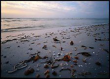 Shells and seaweeds freshly deposited on beach, Sanibel Island. Florida, USA ( color)