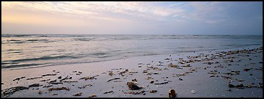 Beach seascape with washed seaweed, Sanibel Island. Florida, USA (Panoramic color)