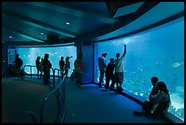 Aquarium, Walt Disney World. Orlando, Florida, USA ( color)