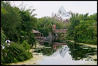 Tropical forest and Everest mountain, Animal Kingdom Theme Park. Orlando, Florida, USA ( color)