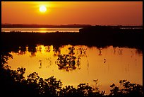 Sun setting over mangrove coast. The Keys, Florida, USA (color)