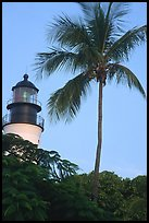 Lighthouse and palm tree. Key West, Florida, USA ( color)