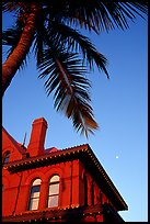 Red house and palm tree. Key West, Florida, USA