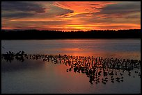 Large pond with birds at sunset under colorful sky, Ding Darling NWR. Florida, USA ( color)