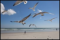 Seagulls and Atlantic beach, Jetty Park. Cape Canaveral, Florida, USA