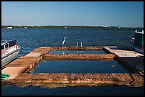 The Keys Pictures - USA stock photos, fine art prints by QTL Terra And Aqua St Augustine