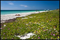 Dune vegetation, Sandspur Beach, Bahia Honda State Park. The Keys, Florida, USA