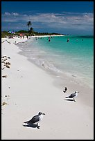 Seabirds, Sandspur Beach, Bahia Honda State Park. The Keys, Florida, USA