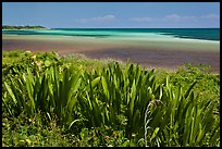 Plants and colorful Atlantic waters, Bahia Honda State Park. The Keys, Florida, USA