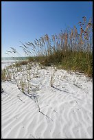 Grasses and white sand ripples on beach, Fort De Soto Park. Florida, USA