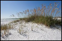 White sand beach with grasses, Fort De Soto Park. Florida, USA
