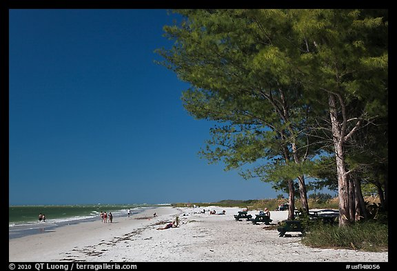White sand beach and ironwood trees, Fort De Soto Park. Florida, USA (color)