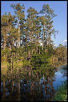 Cypress reflected in channel along Tamiami Trail, Big Cypress National Preserve. Florida, USA ( color)