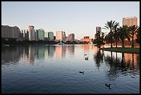 City skyline with row of palm trees at sunrise, Sumerlin Park. Orlando, Florida, USA ( color)