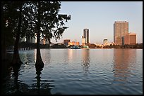 Bald Cypress and skyline, Lake Eola. Orlando, Florida, USA (color)