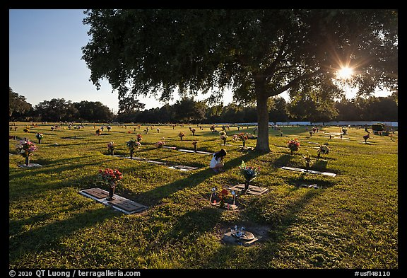 Sun shining trough tree, Cemetery. Orlando, Florida, USA (color)