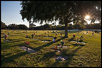 Sun shining trough tree, Cemetery. Orlando, Florida, USA ( color)
