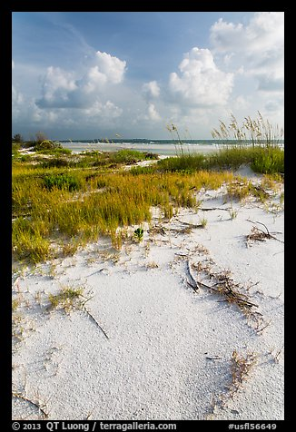 White sand, vegetation, Fort De Soto beach. Florida, USA (color)
