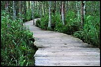 Boardwalk, Loxahatchee NWR. Florida, USA ( color)