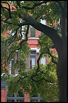 Live Oak tree and facade. Savannah, Georgia, USA ( color)