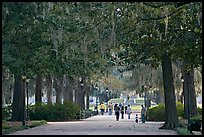 Alley in Forsyth Park. Savannah, Georgia, USA ( color)