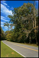 Road turn with trees and Spanish Moss. Natchez Trace Parkway, Mississippi, USA ( color)