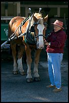 Woman grooming carriage horse. Beaufort, South Carolina, USA (color)