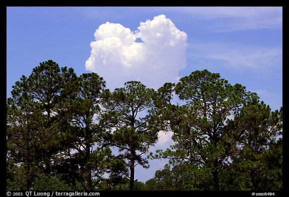Trees and cloud, Hilton Head. South Carolina, USA