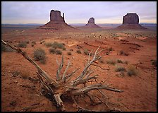 Roots, red earth, and Mittens. Monument Valley Tribal Park, Navajo Nation, Arizona and Utah, USA ( color)