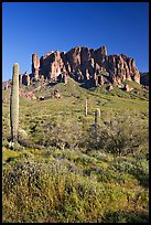 Tall cacti and Superstition Mountains, Lost Dutchman State Park, afternoon. Arizona, USA ( color)